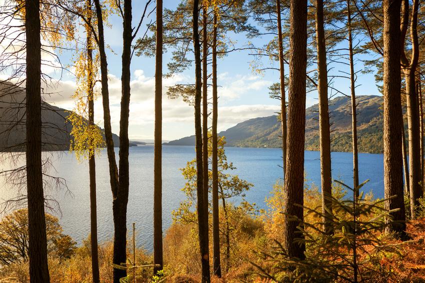 Autumn at Loch Lomond